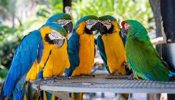 Støt din lokale zoologiske have